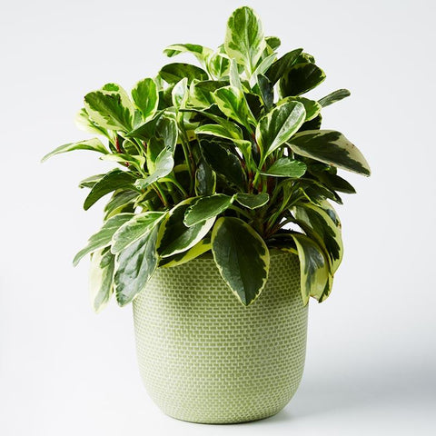 Large Tweed Pot -Sage