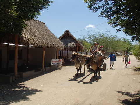 Street scene in Gigante, Nicaragua, with ox-cart. Photo: Leap of Her