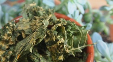 Not-So-Cliche Raw KALE CHIPS