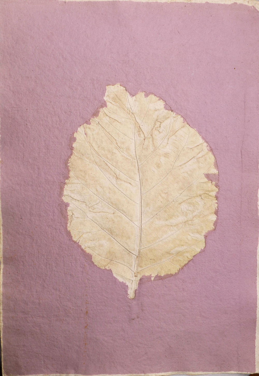 Leaf impression on handmade paper