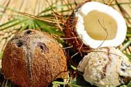 Coconut Musk Fragrance Oil - YankeeScents Potpourri - 1