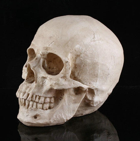 Protective Skull Mask