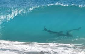 shark surf south africa wetsuits holiday