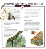Caterpillars, Bugs and Butterflies (Take-Along Guide)