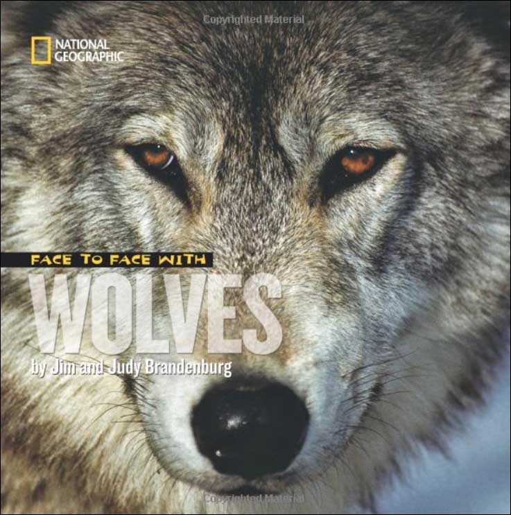 Face to Face with Wolves by Jim Brandenberg; illustrated by Judy Brandenberg