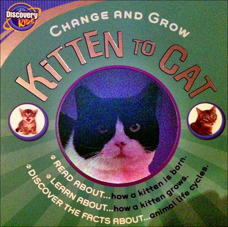 Kitten to Cat (Change and Grow series)