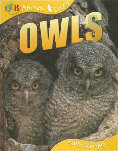 Owls (Animal Lives) by Sally Morgan
