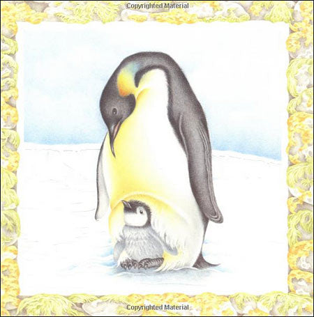 The Little Penguin  (read aloud)