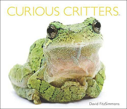 Curious Critters by David FitzSimmons