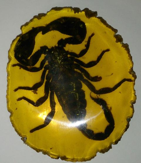 Amber, Fossilized Scorpion, Large Specimen, Chinese - Roadshow Collectibles