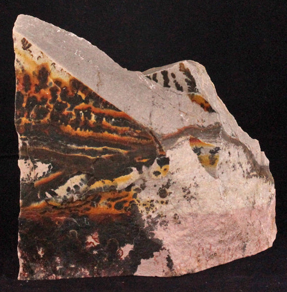Excellent Utah Dendrite Slab Specimen, over 40 million years old - Roadshow Collectibles