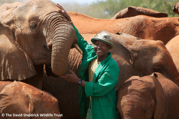 Saving Elephants: LALF & DSWT Partnership