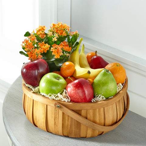 The Plant and Fruit Basket