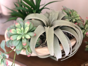 Dough Bowl Succulent