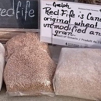 Red Fife Wheat Berries