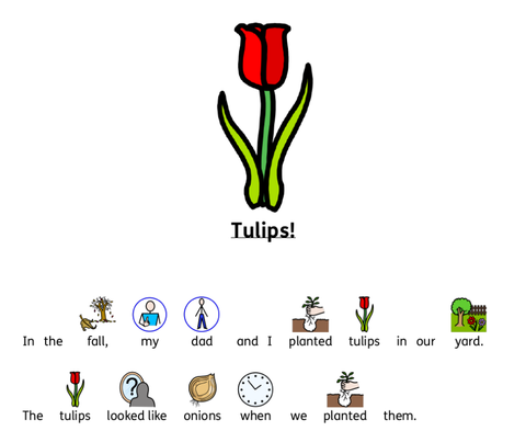 Tulips story symbolized