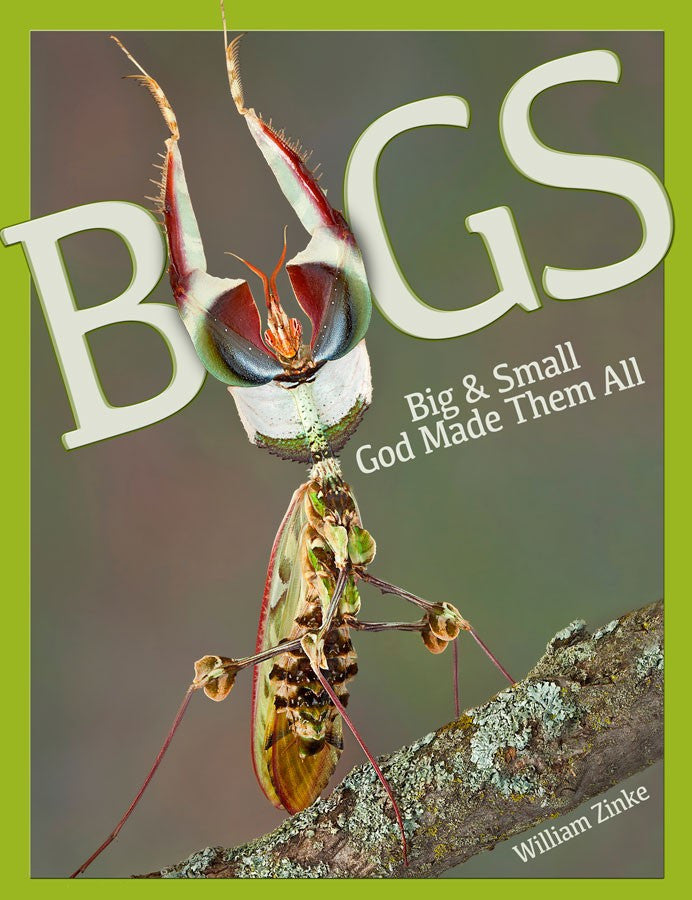 Bugs: Big & Small God Made Them All by William Zinke
