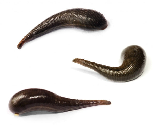 Pet Leech Pack (10)