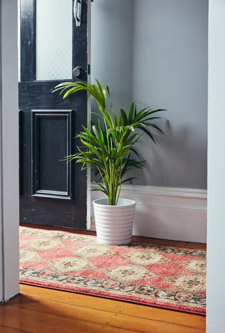 runner rug with plant
