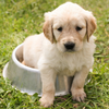 Spetacular™ Potty Training Tips For Your New Puppy!