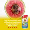 Electrolytes For Dogs? Benefits of Staying Hydrated