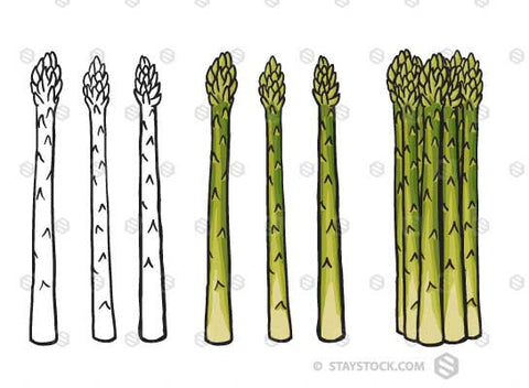 Asparagus Spears drawing