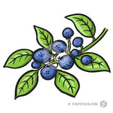 Blue Berry Bush drawing.