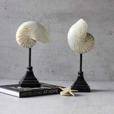 Seychelles Shell Sculptures (Set of 2) - Home Artisan_4