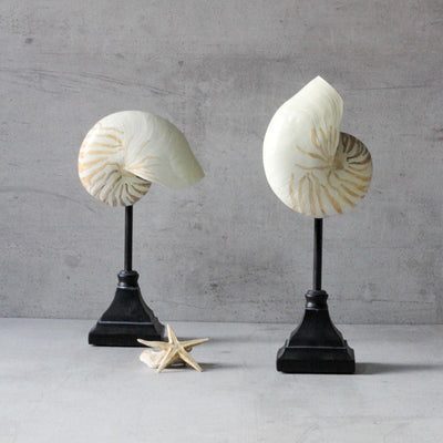Seychelles Shell Sculptures (Set of 2) - Home Artisan_5