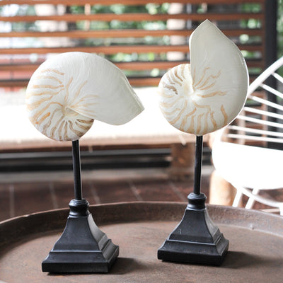 Seychelles Shell Sculptures (Set of 2) - Home Artisan_2