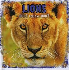 BUILT FOR THE HUNT LIONS