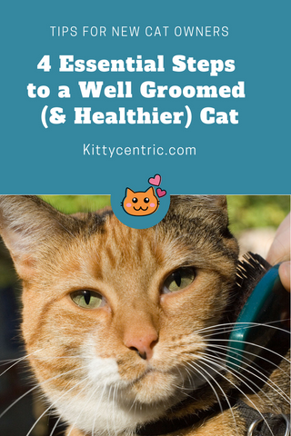 grooming tips for new cat owners