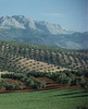 Best Olive Oil of Spain