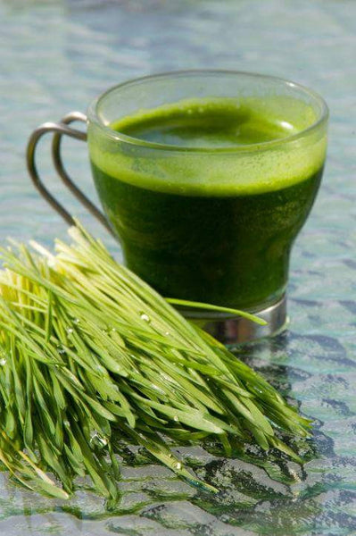 Why does Andi's Way Wheatgrass taste so amazingly sweet and smooth?