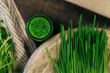 Fresh Organic Wheatgrass, harvested at its peak