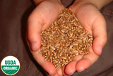 Organic Hard Red Winter Wheat Seed