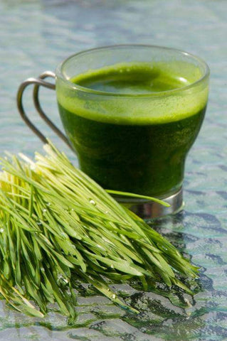 30 Shots of  2 oz Frozen 100% Raw Organic Wheatgrass Juice - FREE SHIPPING