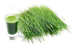 Load image into Gallery viewer, Fresh 100% Raw Organic Wheatgrass Juice