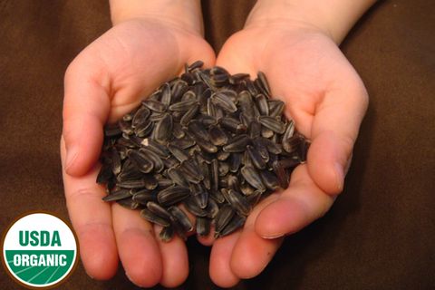 Organic Black Oiled Sunflower Seed - 5 lb Bag