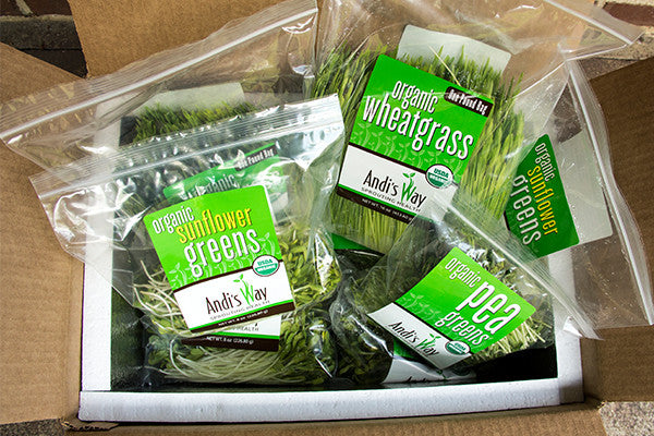 shipping organic wheatgrass, pea greens and sunflower sprouts