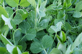 Healthy Organic Pea Tendrils from Andi's way