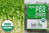 Fresh Organic Pea Greens Sprouts