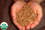 Organic Hard Red Winter Wheat Seed - 5 lb Bag