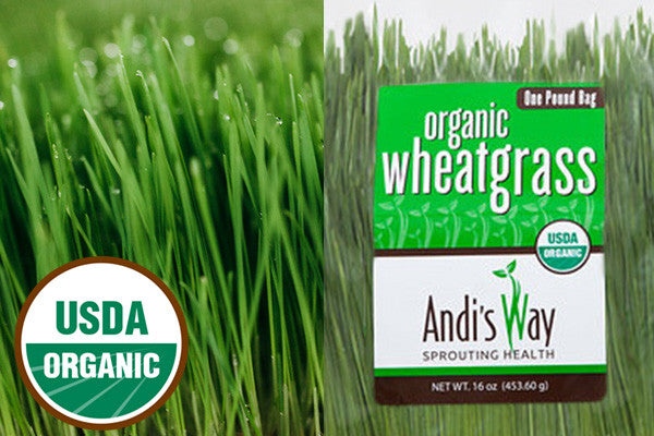 fresh cut organic wheatgrass
