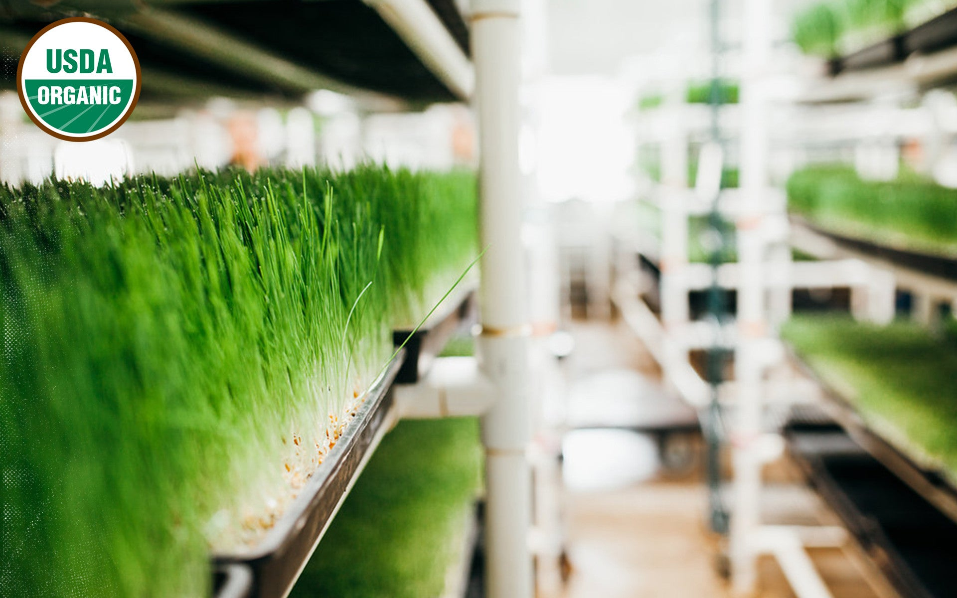 andi's way wheatgrass growing facilities