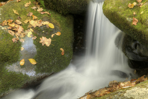 Waterfall and Leaves