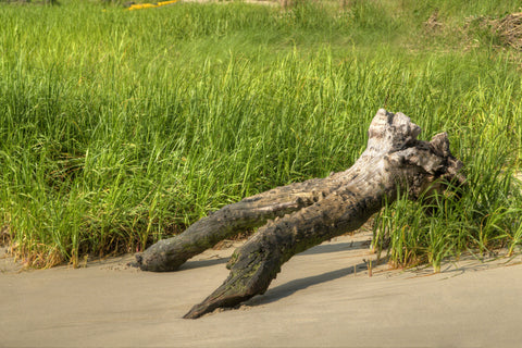 Driftwood in the Grass