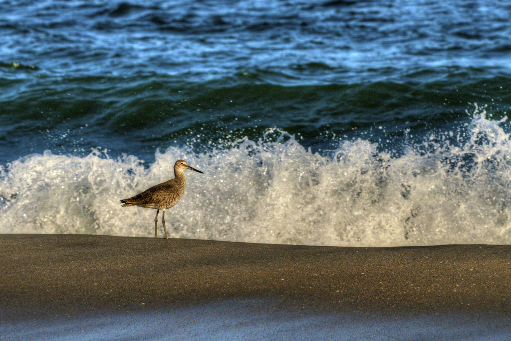 Bird and the Waves