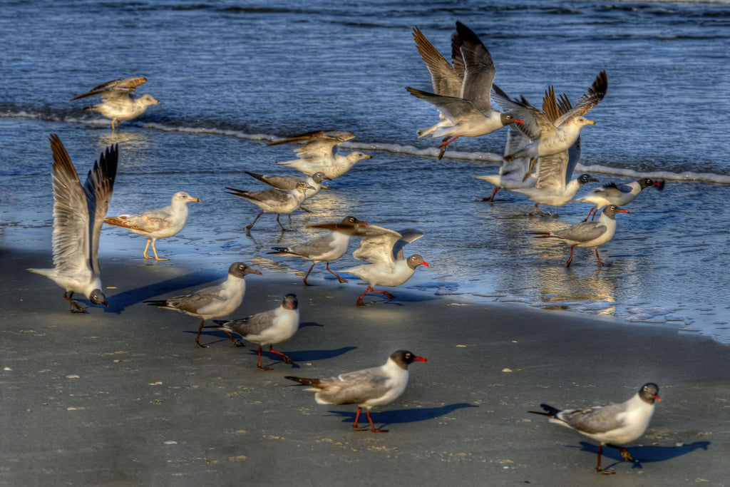 Flock on the Beach