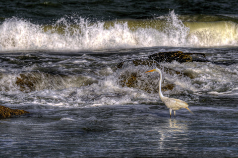 Egret at the Ocean